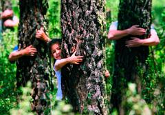 Apadrina un árbol