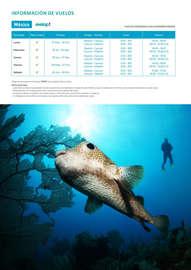 Buceo & Snorkel - Riviera Maya 2017
