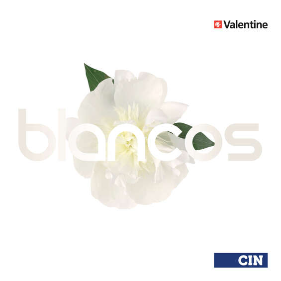 Ofertas de Valentine Decocenter, Blancos